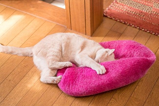ネパールフェルトのキャットハウス パンプキンの写真2-ベッドになったりざぶとんになったり、いろいろな遊び方をしてくれます。\