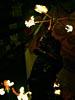 dance_of_shiva2012_keita_210
