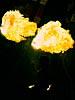 dance_of_shiva2012_keita_240
