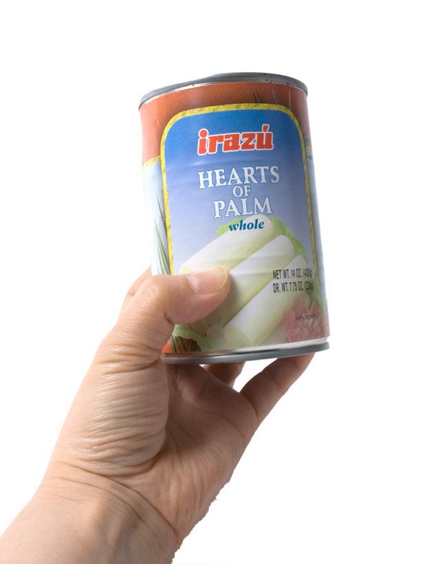 椰子の芽 - パルミット Hearts of Palm 【Irazu】 5 - 手に持ってみました。お試しには丁度いいですよ。