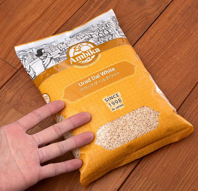 黒豆 ホワイトウラッドダル(引き割り)White Urad Dal split 【1kgパック】 6 - サイズ比較のために手に持ってみました