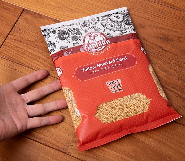 イエロー マスタード シード - Yellow Mustard Seed【500gパック】 5 - サイズ比較のために手に持ってみました