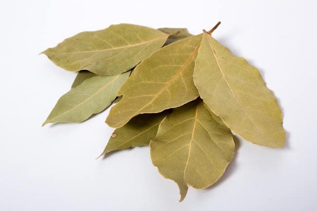 【オーガニック】ベイリーフ - Bay Leaves 【5g】 2 - 月桂樹の葉を乾燥させました。インディアン・ベイリーフとは、葉脈の走り方が違います。