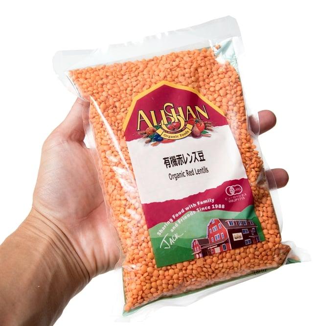 【オーガニック】赤レンズ豆 - Red Lentil 【500g】 4 - サイズ比較のために手に持ってみました