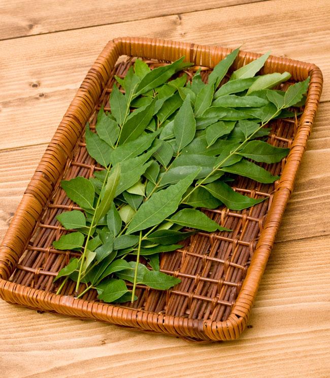 フレッシュカレーリーフ - Fresh Curry Leaves 【15g】 4 - 内容量は15gですが意外とタップリあります!