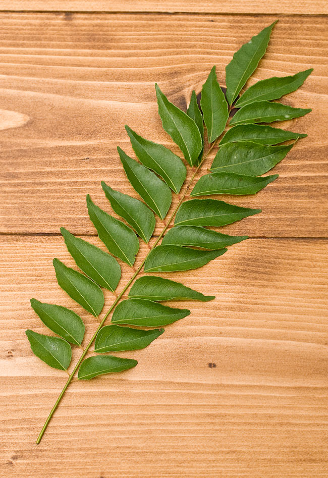 フレッシュカレーリーフ - Fresh Curry Leaves 【15g】の写真