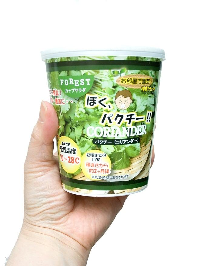 育てて食べられるカップサラダ。「ぼく、パクチー!」 - パクチー(コリアンダー)栽培キット【Forest】 4 - 手に持ってみました。場所を取らない小型タイプ。キッチンのカウンターなどで育ててみてはいかがでしょうか?
