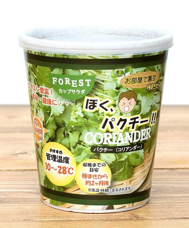 育てて食べられるカップサラダ。「ぼく、パクチー!」 - パクチー(コリアンダー)栽培キット【Forest】の写真