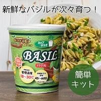 育てて食べるカップサラダ。- バジル栽培キット 【Forest】