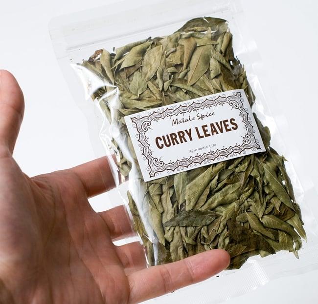 カレーリーフ - Curry Leaves 【10g袋入】(curry patta) 5 - サイズ比較のために手に持ってみました