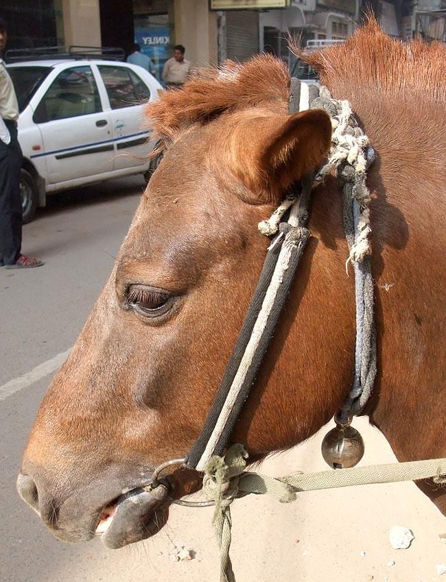 ネパールアニマルベル(直径約6cm) 5 - 使用例。馬さんの首に注目。(こちらに付いているベルは、紹介のベルと、同じ大きさではありません。)