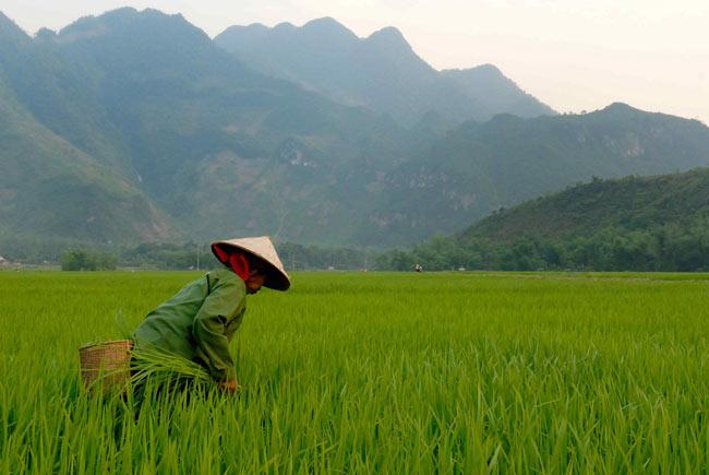 """ベトナムの竹笛 - 房付きロング 45cm 6 - ベトナムの農村の風景photo is by<a href=""""https://www.flickr.com/photos/43423301@N07/4014932202"""">M M</a>on flickr"""