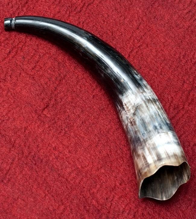 ベトナム水牛のホーンの写真
