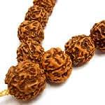 ルドラクシャ(菩提樹)の数珠の商品写真