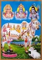 〔約70.5cm×約50cm〕大判インドのヒンドゥー神様ポスター - 聖牛とインドの神様