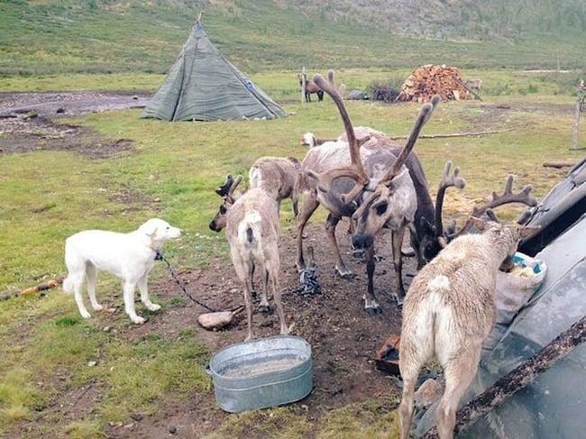 旅がなければ死んでいた 3 - モンゴルでは馬に乗って、トナカイ遊牧民を探して山を越え、谷を越え、尻が割れ。