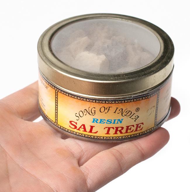 沙羅双樹(サル・ツリー) - レジン樹脂香 4 - サイズ比較のために手に持ってみました