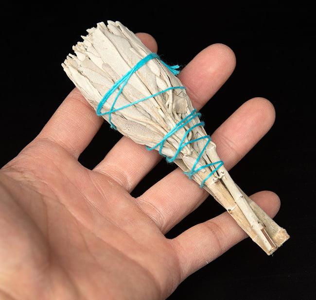 カリフォルニア ホワイトセージ 無農薬 トーチ バンドル スティック [12cm  20g程度] 5 - サイズ比較のために手に持ってみました