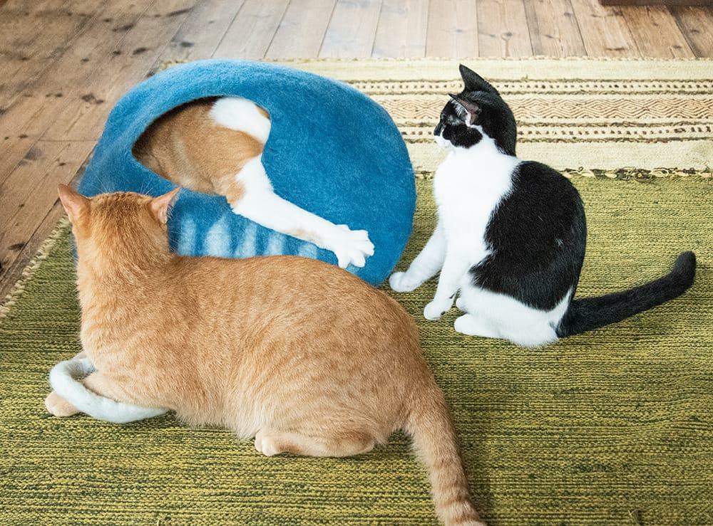 ネパールフェルトのしっぽ付きキャットハウス 8 - 猫パンチが発射されることも