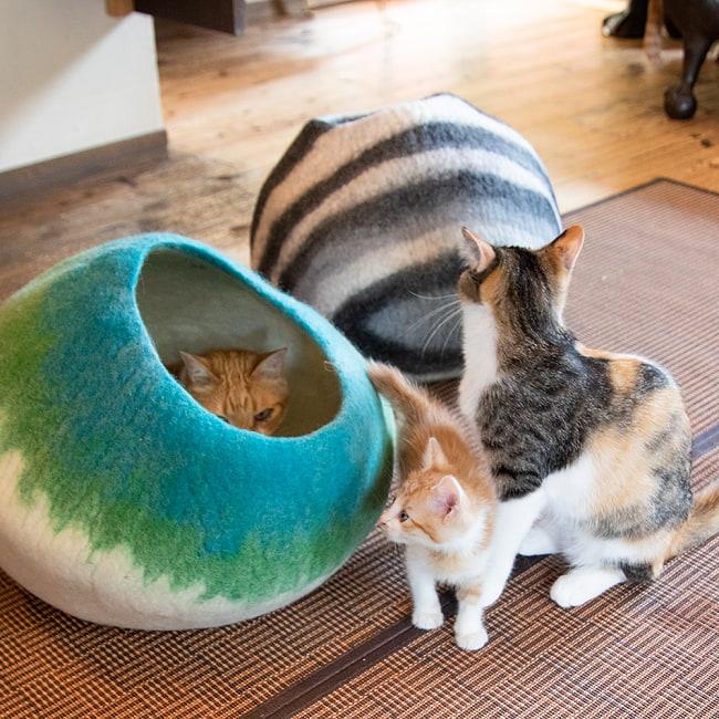 ネパールフェルトの猫ちぐら しっかりめ丸形タイプ 5 - みんな興味津々で集まってきます!