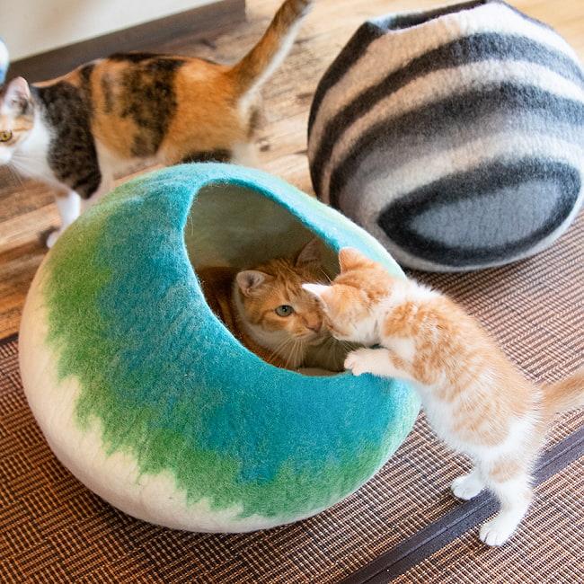 ネパールフェルトの猫ちぐら しっかりめ丸形タイプ 7 - 多頭飼いならではの醍醐味!