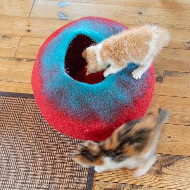 ネパールフェルトの猫ちぐら しっかりめ丸形タイプ 8 - テンション爆上がりの子猫ちゃんたち