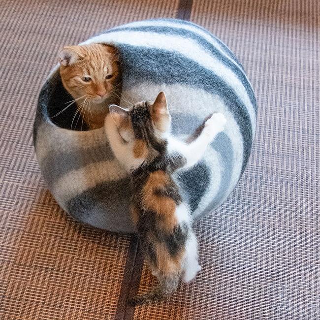 ネパールフェルトの猫ちぐら しっかりめ丸形タイプ 9 - ときには取り合いをするシーンも…